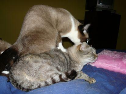 Óscar y Millie, haciendo lo que no deberían hacer herman@s
