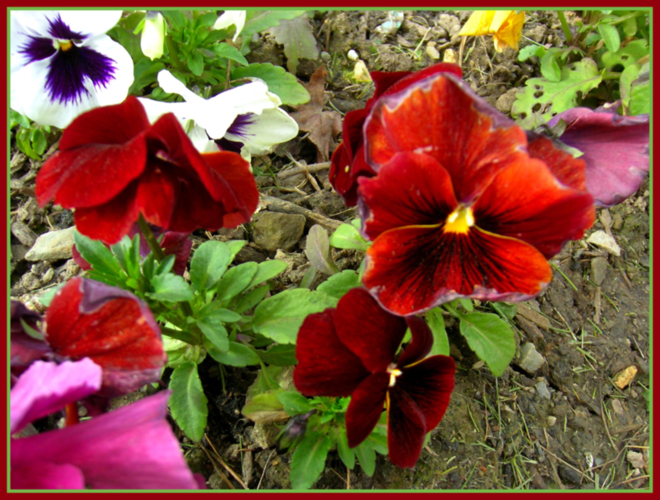 descarga la foto en su tamao original todos los derechos reservados flores de jardin