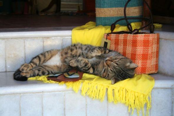 De siesta