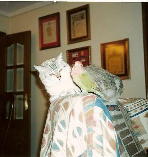 kika y Raul
