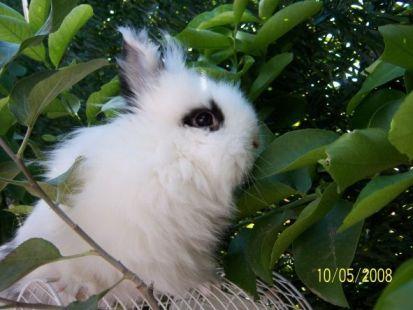 el conejo mas guapo del mundo !!!!