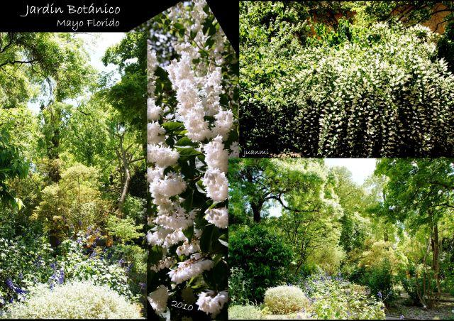 Jardin bot nico fotos de valencia - Jardin botanico valencia ...