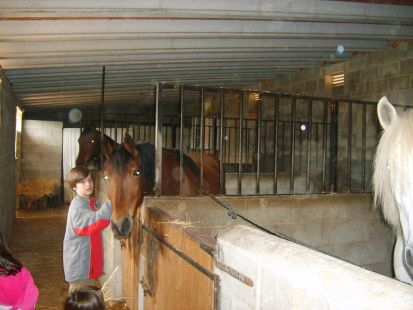 caballo de Jose