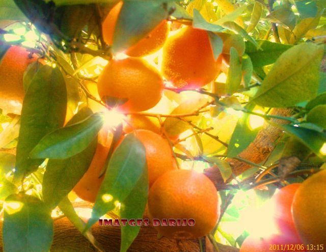 taronjes de Benaguasil