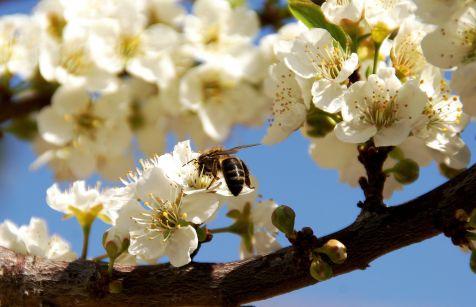 Chulilla, primavera