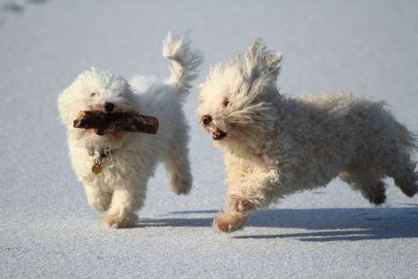 ...jugando en el hielo