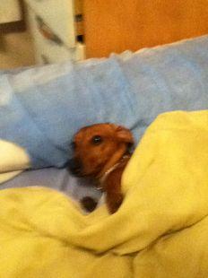 Mi perrito echando una siesta