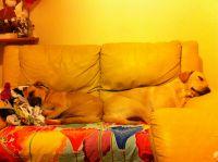 Las bellas durmientes
