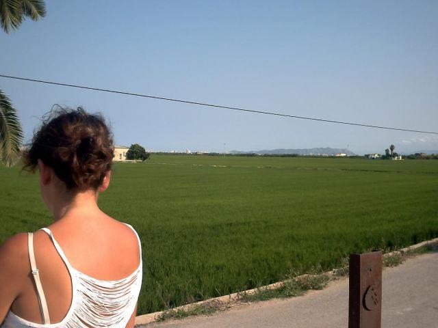 Contemplando los arrozales