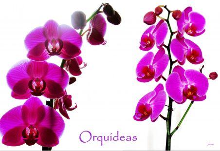 Orquideas, Jardin Botánico