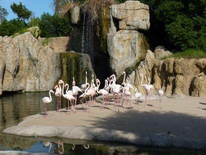 Flamencos Rosados en el Bio Parc