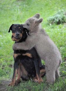 El amor es para todos