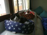 Benanci  i  Marcel.lí