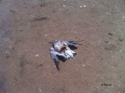 El abandono que sufre el Parque de  la Dehesa del Saler