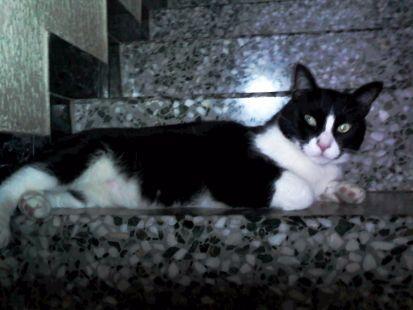 Tity vigila la escalera