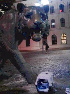 Tity vista al tigre de acero en Oslo Noruega