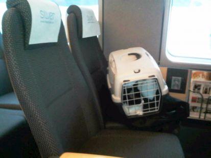 Tity viaja en tren Noruego Flytoget