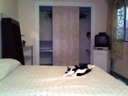 habitacion de gatito Tity