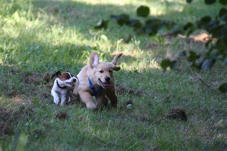 Paco jugando con un amigo