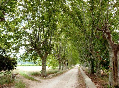 Cami del Monestir de Sant Jeroni