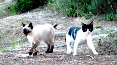 gatos salvajes , El Saler
