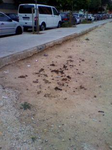 Defecadero canino en Solar municipal enfrente IES Malilla.
