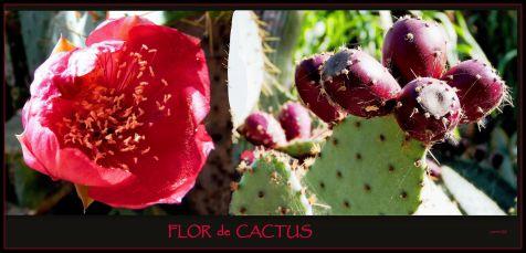 Jardín botánico, flor de cactus