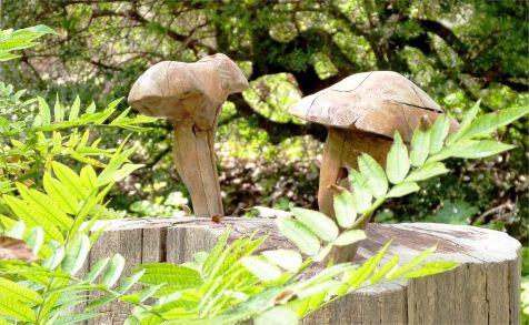 Botánico, Hongos